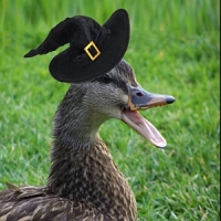 A picture of a duck wearing a halloween hat, made by Freya who won the victorian state final poetry slam